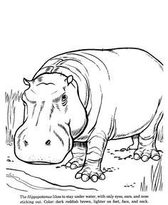 Drawn rhino hippo De and Lagos drawing