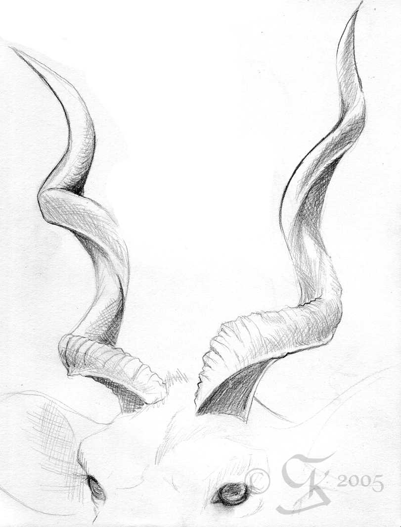 Drawn horns Horns leia coda 2 horns