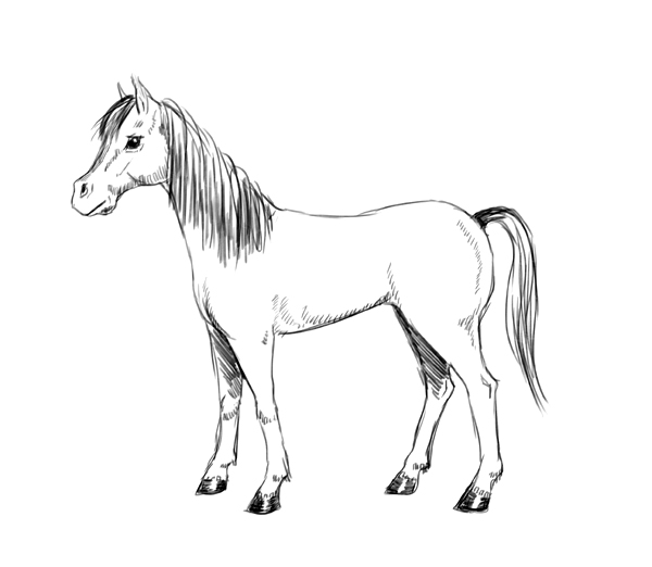 Drawn horse  using a Elves The