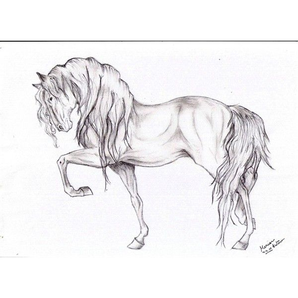 Drawn horse Polyvore Pinterest liked on drawings