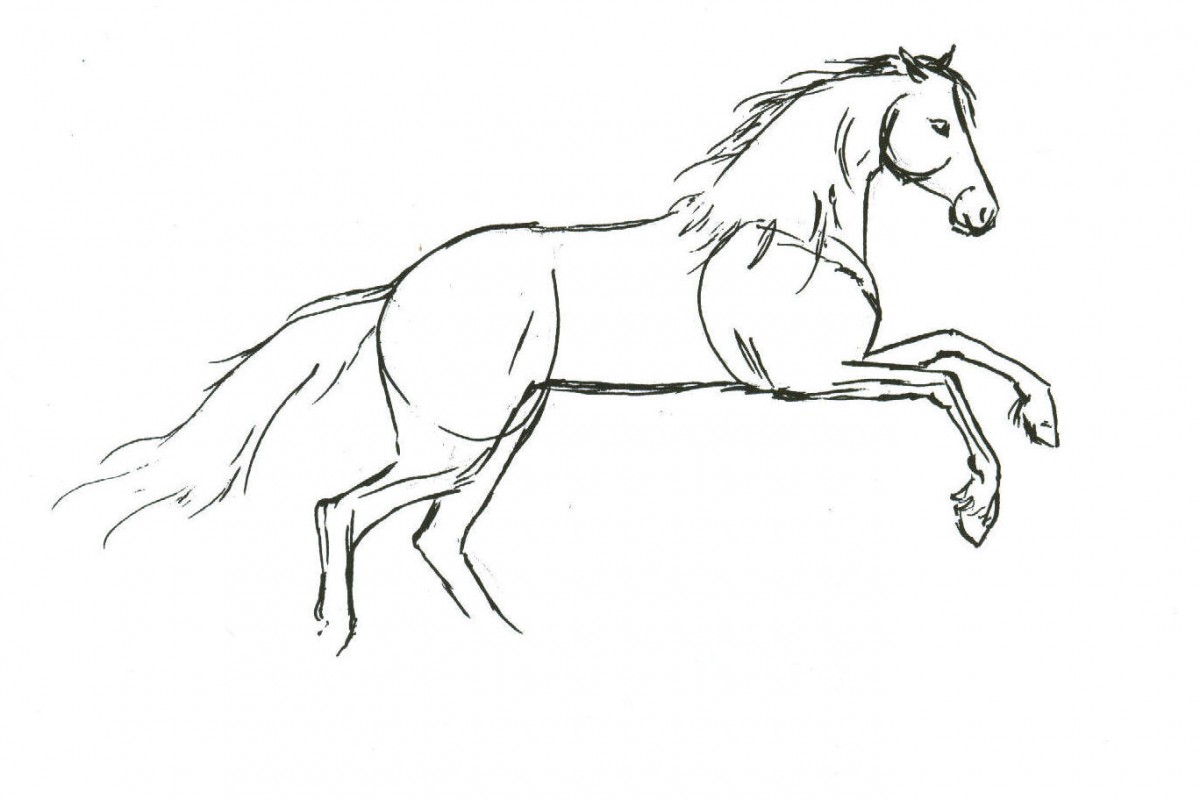 Drawn horse Horse To Drawing Draw Horses