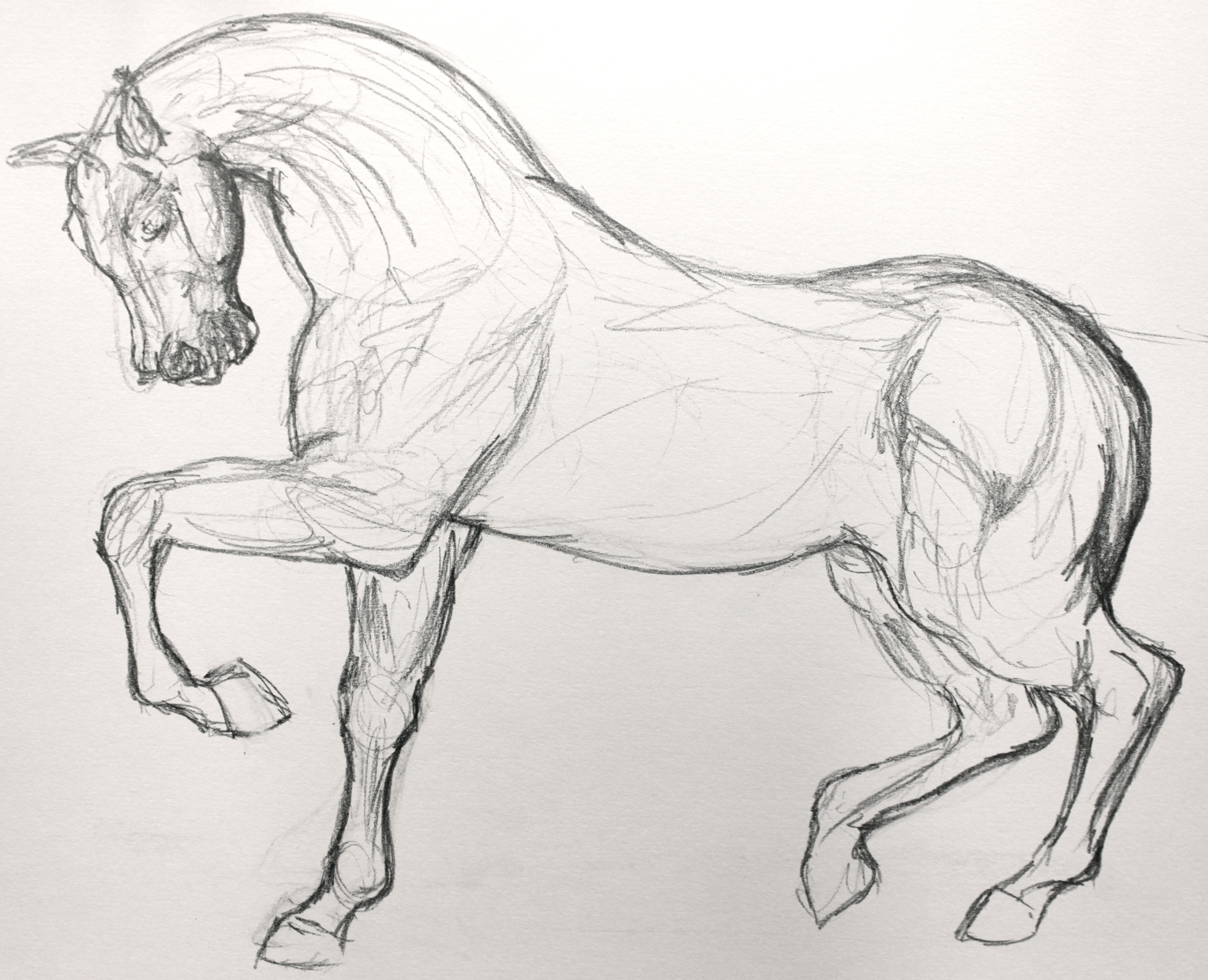 Drawn horse Process Horse  Piece: Personal