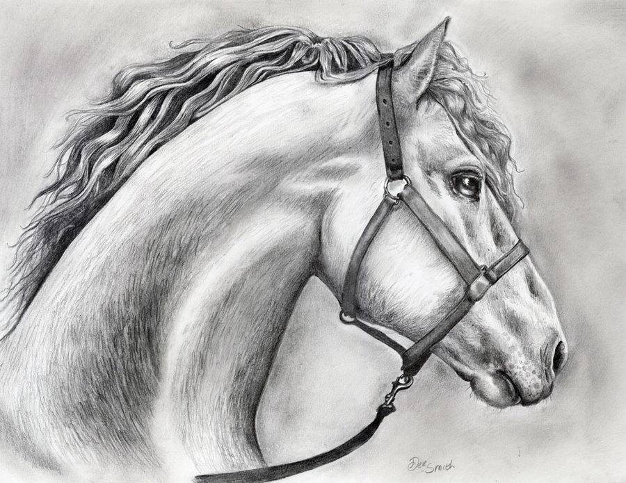 Drawn pug amazing horse Are Omg drawings horses Horse