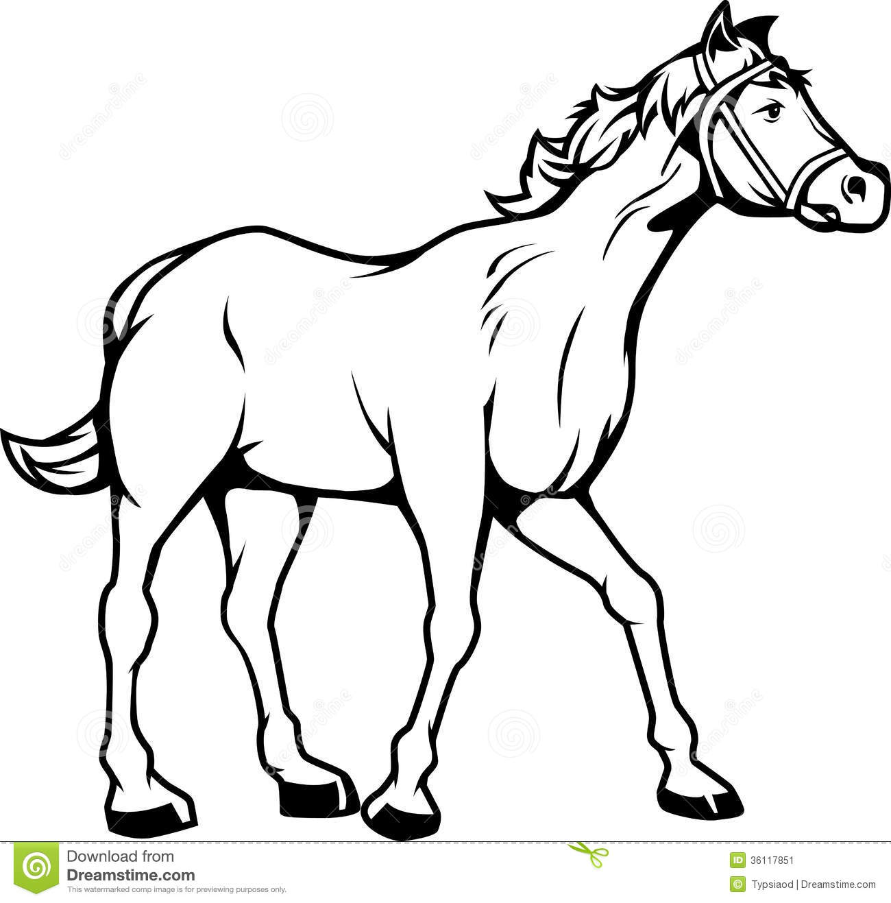 Foal clipart Drawings Drawings Black White and