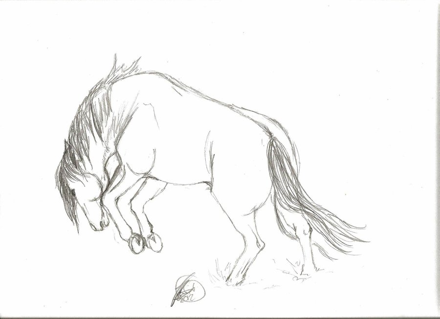 Drawn horse bucking Horse drawing photo#3 Bucking Bucking