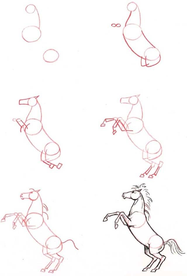 Drawn horse drawed By Pinterest step (1) to