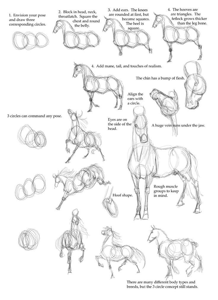 Drawn horse drawed Horse images a by on