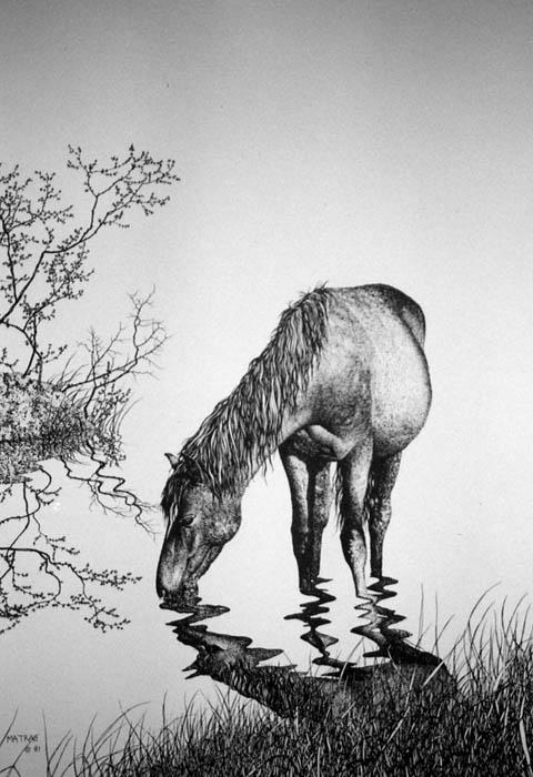 Drawn horse ink drawing Matra Drinking Ink Pen Print