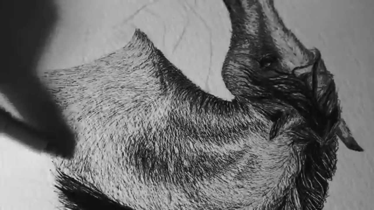 Drawn horse ink drawing YouTube Ink Pen Horse and