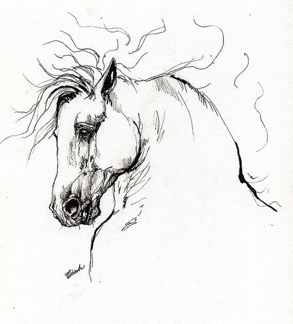 Drawn horse ink drawing Drawings in more on images