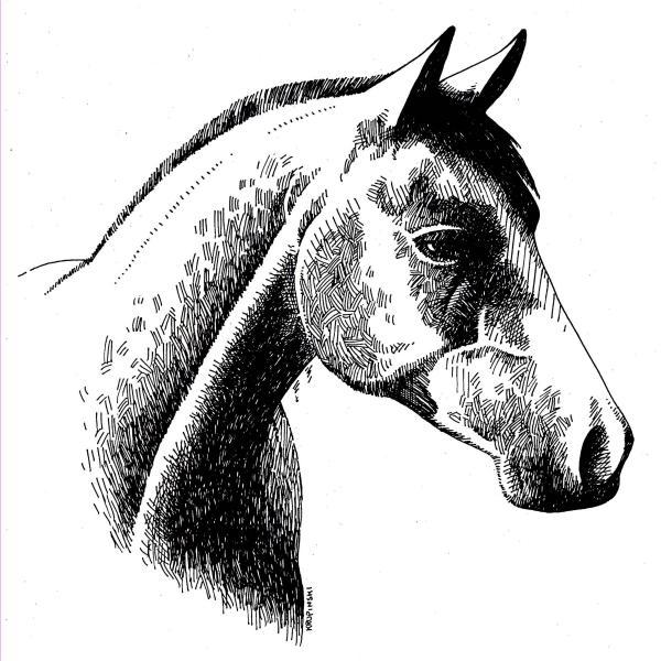 Drawn horse ink drawing  Drawing Ink Drawing Horse