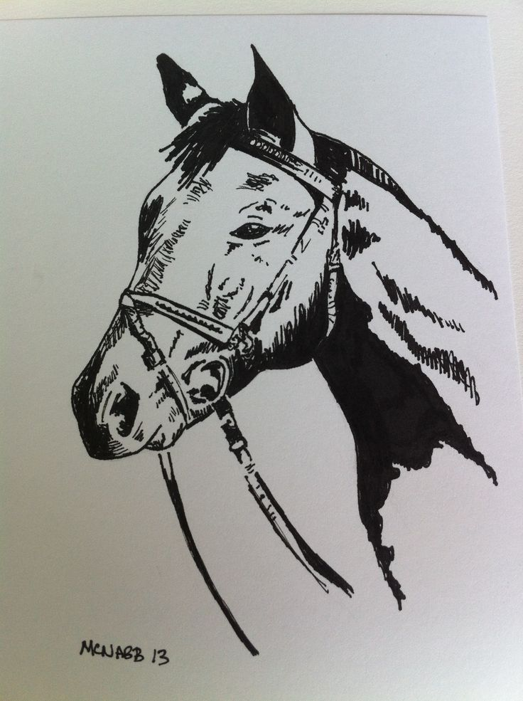 Drawn horse ink drawing Drawings white black drawings and