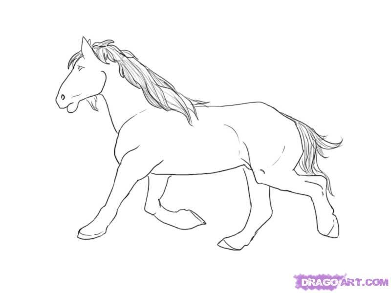 Drawn horse mustang horse A 8 mustang Farm step