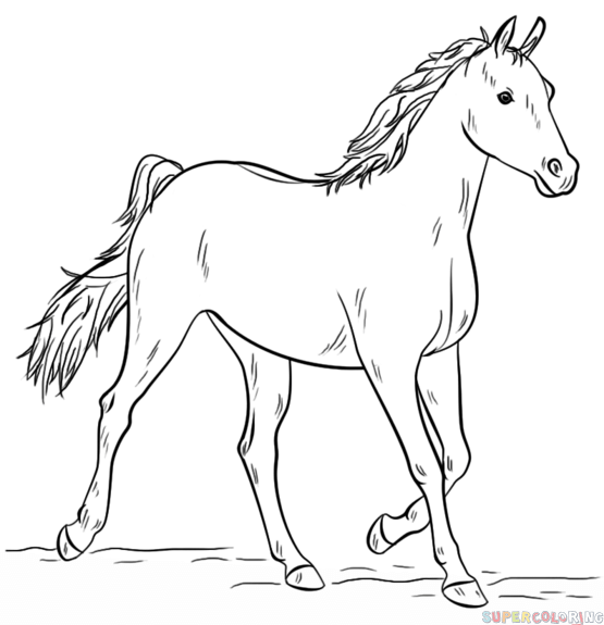 Drawn horse mustang horse Horse to arabian How step