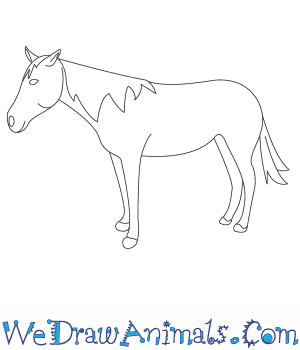 Drawn horse mustang horse A Horse How to