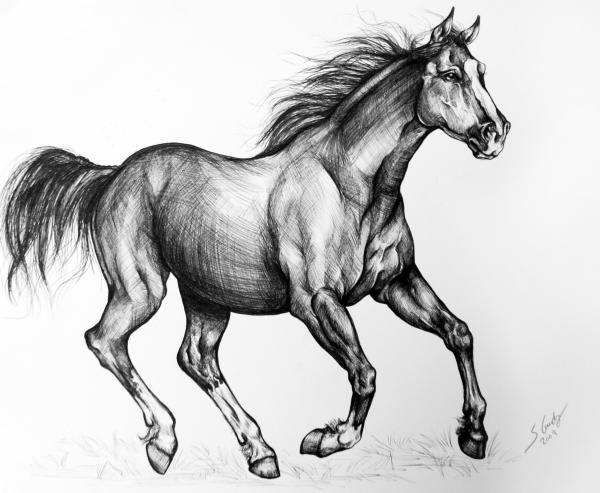 Drawn horse mustang horse Horse photo#27 Mustang mustang horse