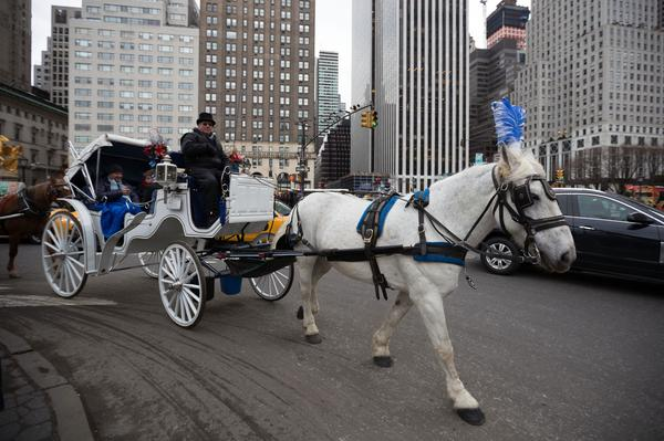 Drawn horse new york To outside Vows Drawn Incoming