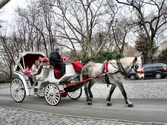 Drawn horse new york Horse carriages  blasio Council