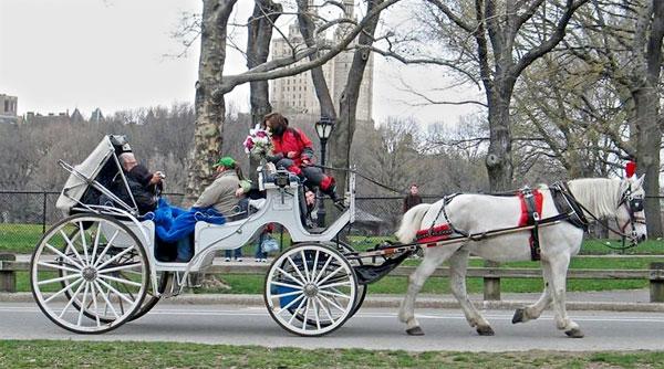 "Drawn horse new york ""Inhumane"" Bloomberg: Blasio Ban Carriages"
