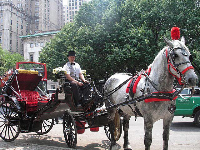 Drawn horse new york Horse York a Blackburn No