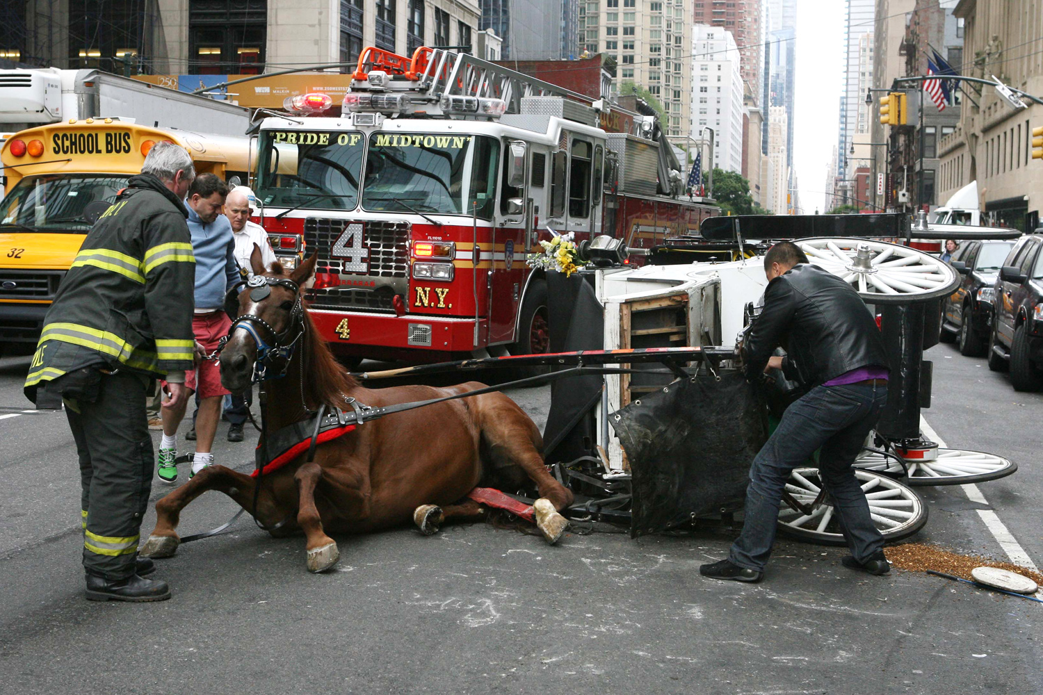 Drawn horse new york In ground Horses carriage of