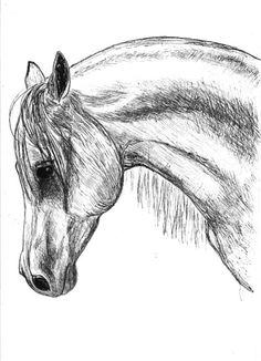 Drawn horse pen Drawings horse  Horse Art