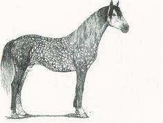 Drawn horse pen Painting pen Susie Wildlife Wild
