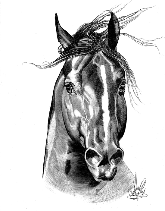 Drawn horse pen Sale Shot Greeting Shot Head
