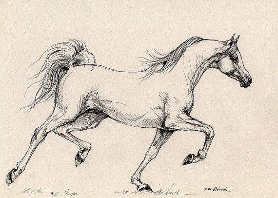 Drawn horse pen Pinterest by horse on £30