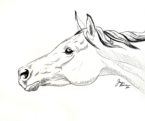 Drawn horse pen  & horse original pen