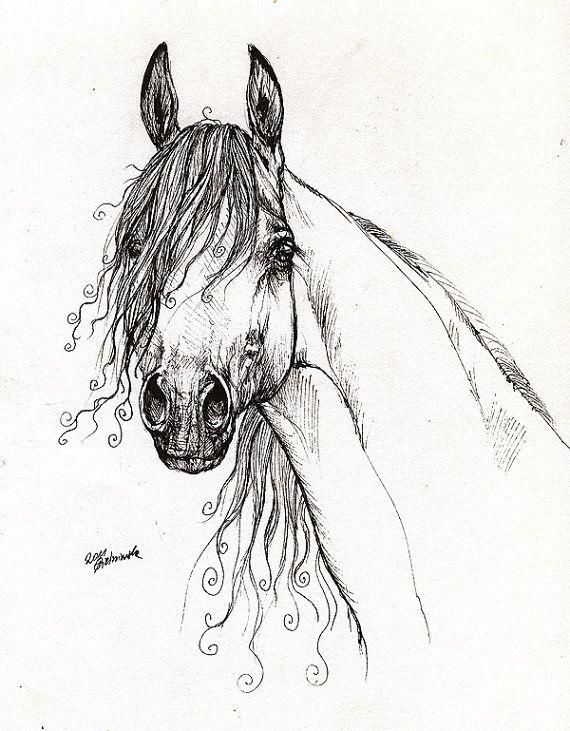Drawn horse pen Arabian horse Art portrait drawing