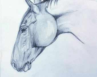 Drawn profile horse head Pencil artwork Drawing Profile Horse