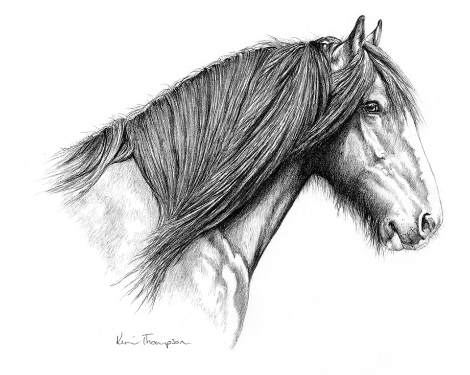 Drawn horse shire horse Young Horse  Shire