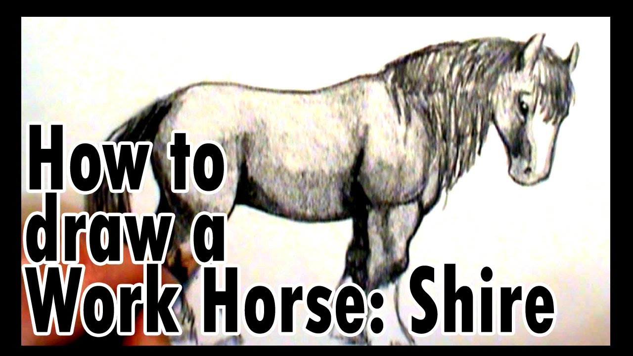 Drawn horse shire horse To a to work How