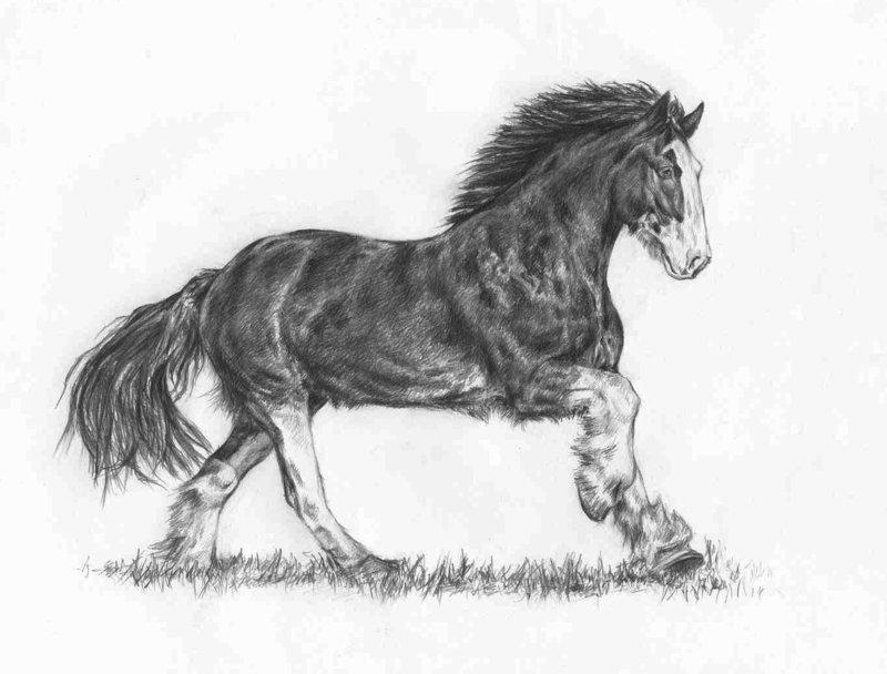Drawn horse shire horse Horse quuicksilver Drawing  quuicksilver