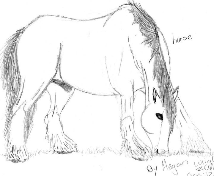 Drawn horse shire horse Horse Drawing My CrazyWerewolfGirl Horse