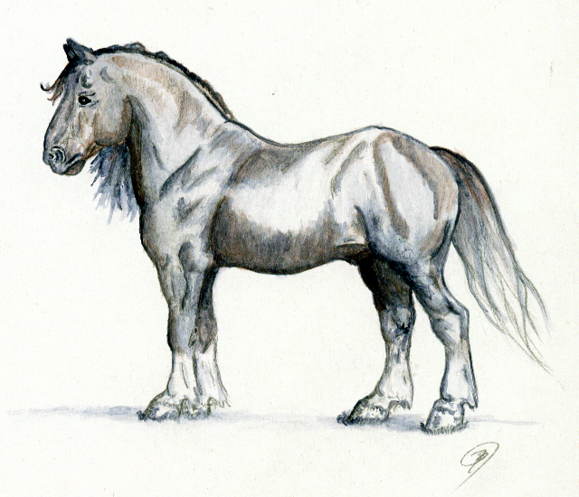 Drawn horse shire horse Horse by by DeviantArt Stallion