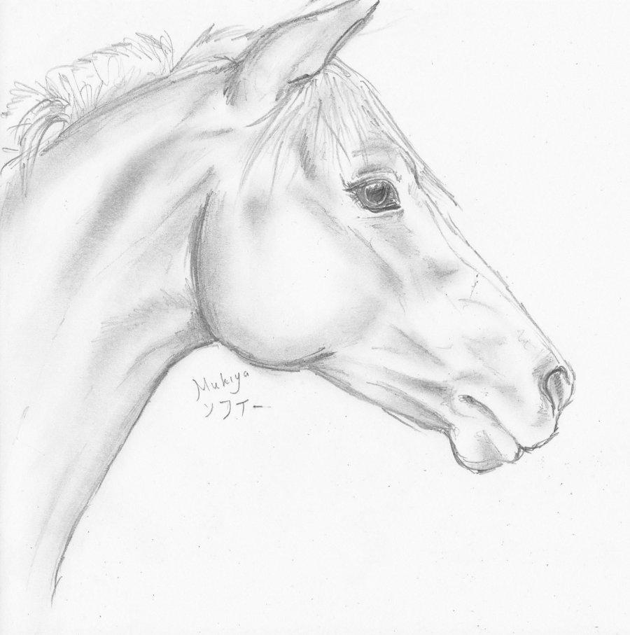 Drawn profile horse head Mukiya animals art by drawings