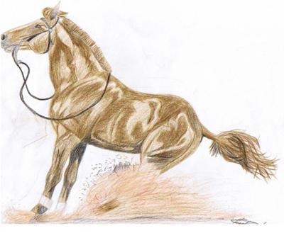 Drawn horse spirit Western reining Spirit (Part Horse