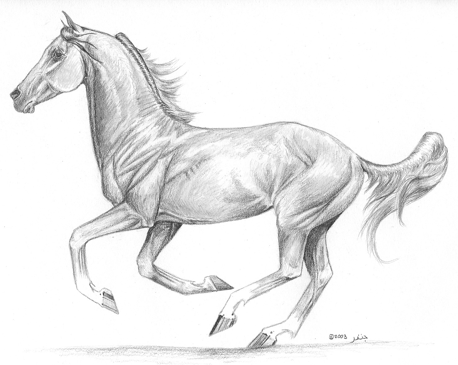 Drawn horse stallion In on Arabian free paper