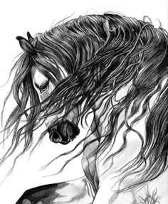 Drawn horse stallion DrawingsPen American Head Spirit Andalusian