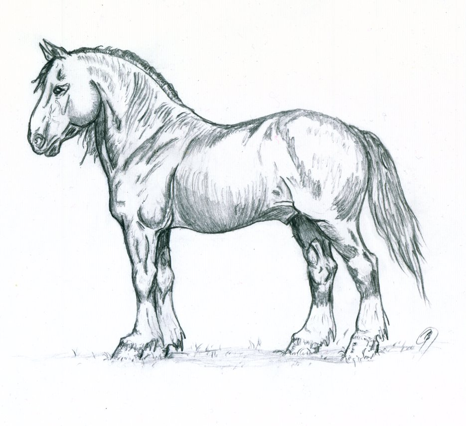 Drawn horse stallion Photo#5 and Horse Drawings drawings