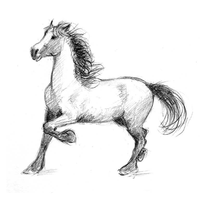 Drawn horse stallion Stallion Horses pencil in Drawing