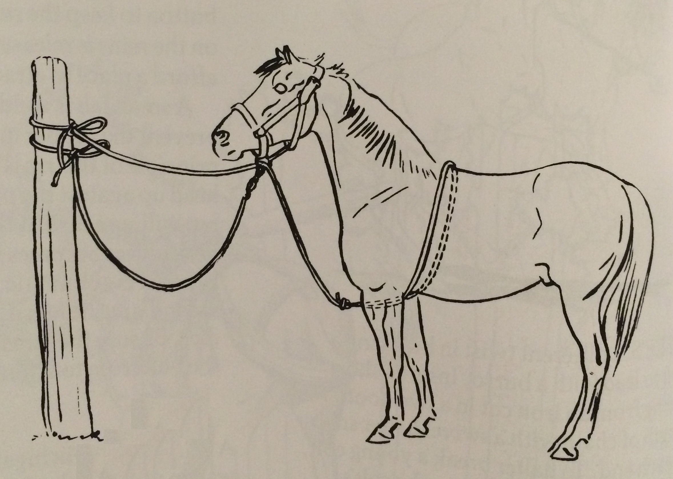 Drawn horse tied A up to tie
