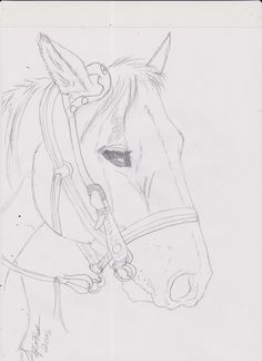 Drawn horse tied Work fun a horse named