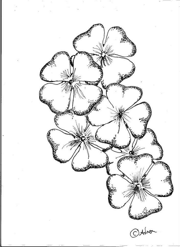 Drawn horseshoe four leaf clover Worksheet lesson ideas drawings Pinterest