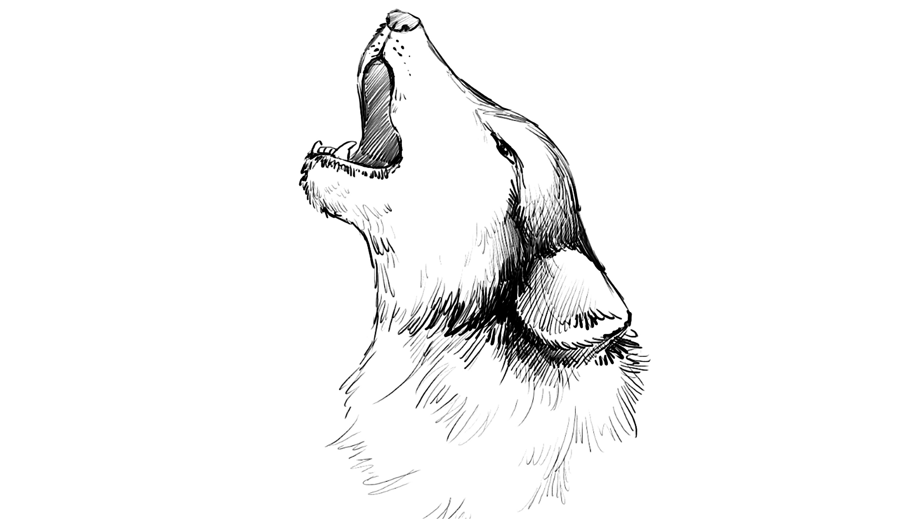 Drawn howling wolf To How a Howling to