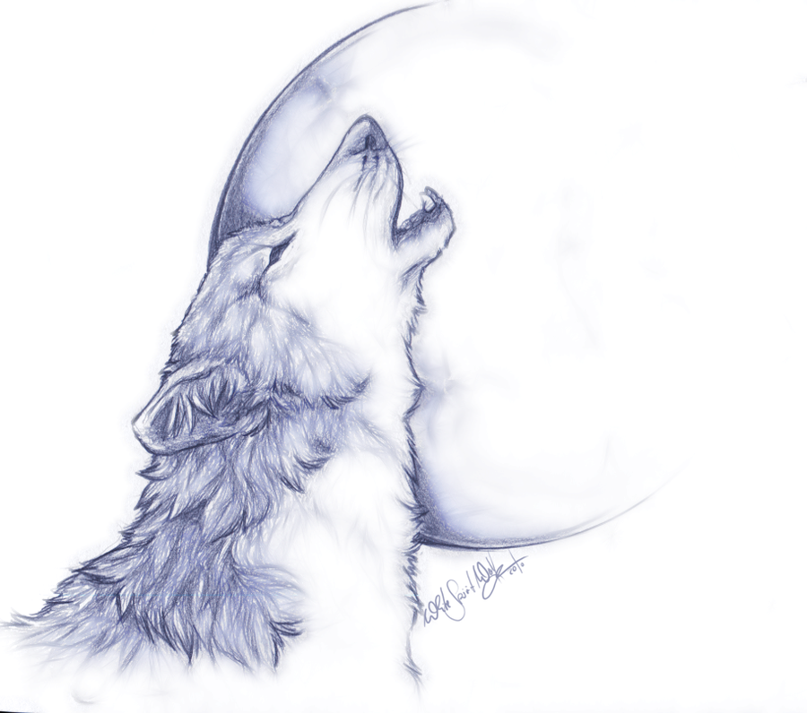 Drawn howling wolf Drawing Howling Drawing Howling Wolf