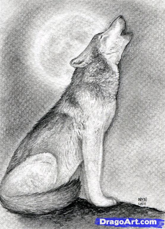 Drawn howling wolf To how a Drawing howling