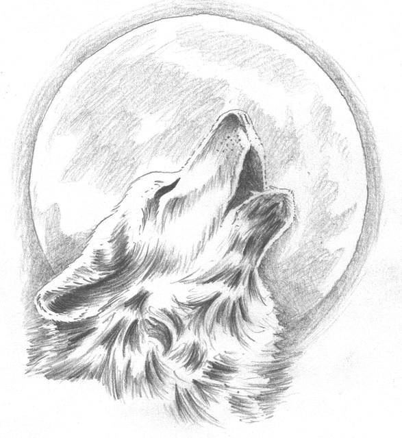 Drawn howling wolf Wolf our